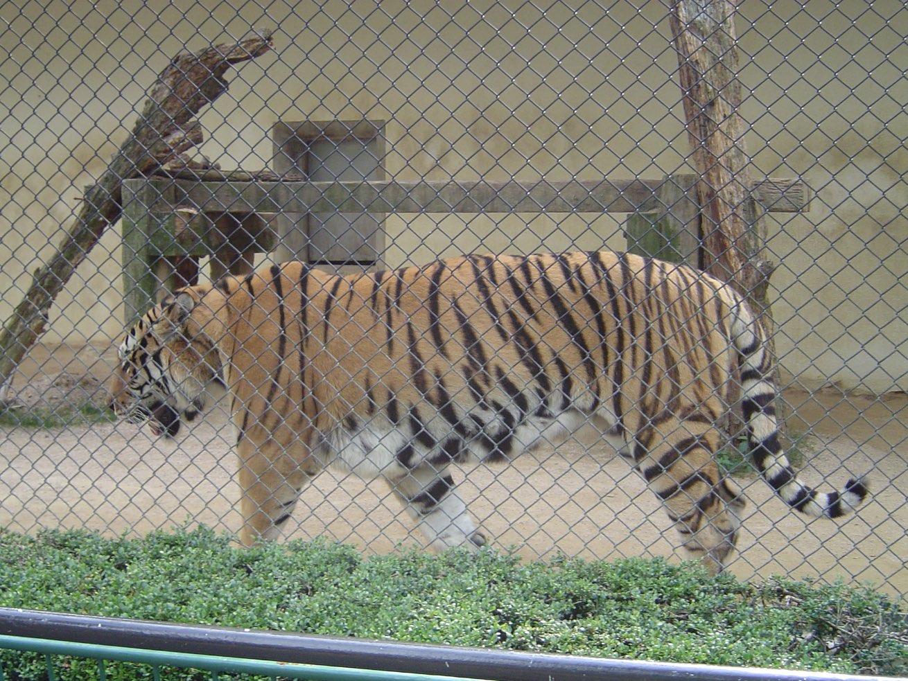 Asa Zoological Park  Next Stop, Japan
